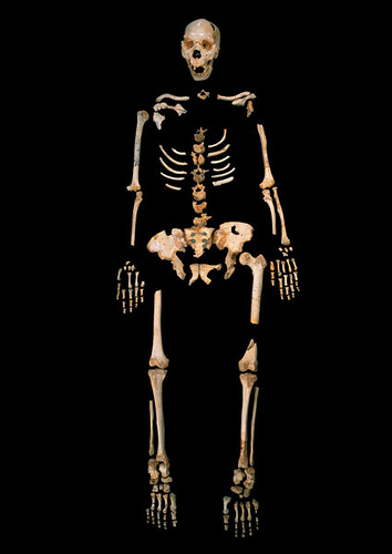 homininsequence