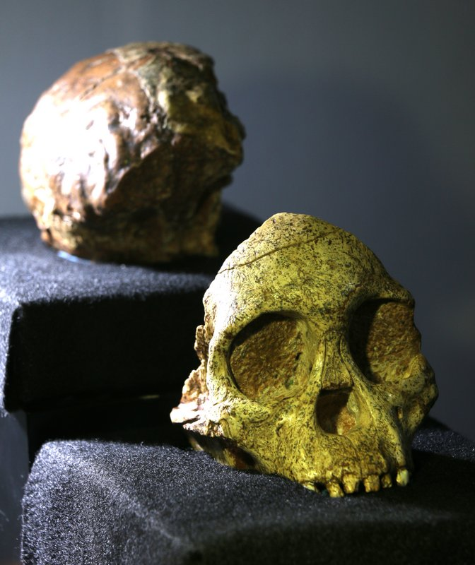 The Taung Child fossil