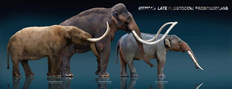 gomphotherehunting5