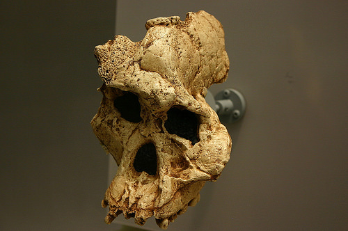 africanusfossil