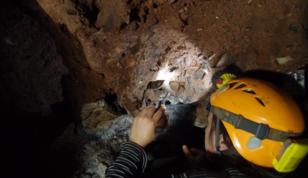 Sterkfontein: A History of Evolution in the Cradle of Humanity