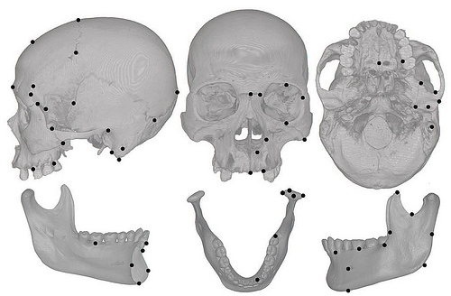 Cranial jaw landmark map body.eps